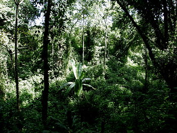 English: Impression of Kakamega Rain Forest